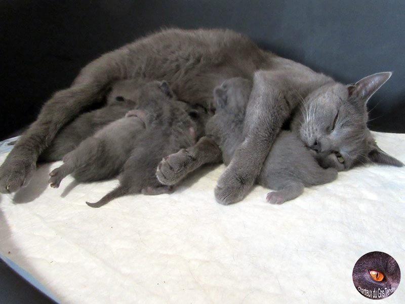 Context bij adoptie kittens